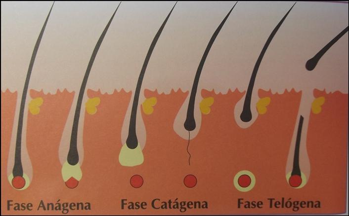 fase do cabelo